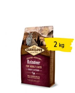 cat-renna-2-portfolio-ticinese-petfood